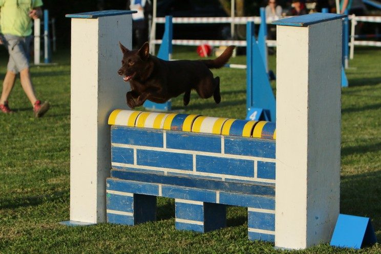 Concours nocturne d'agility - Cossonay - 20.05.2016