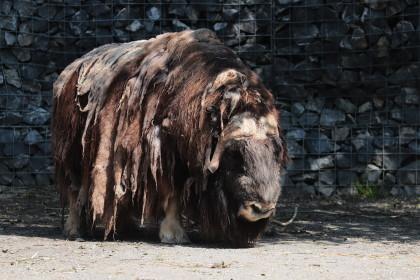 Zoo Berne - 07.07.2018