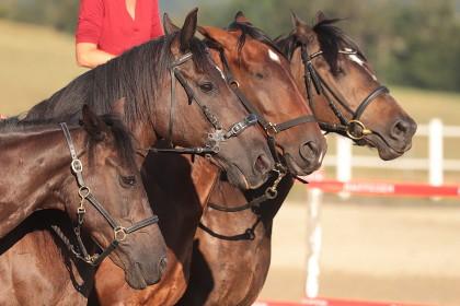 Spectacle Swissteam-Horseshow - Cronay - 02.08.2018
