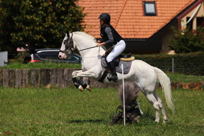 Cross - concours interne club Equipassion - Cugy VD - 01.08.2019